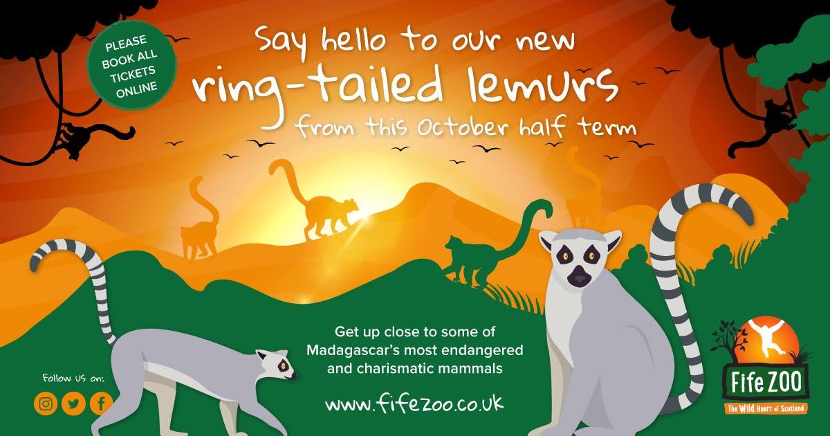 lemur-poster